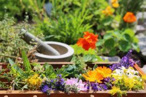 Heilpflanzen bei Nasennebenhöhlenentzündung